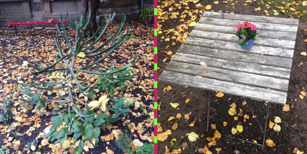 garden_last_view_k