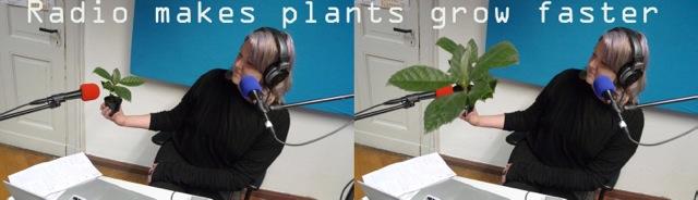 mj_plant